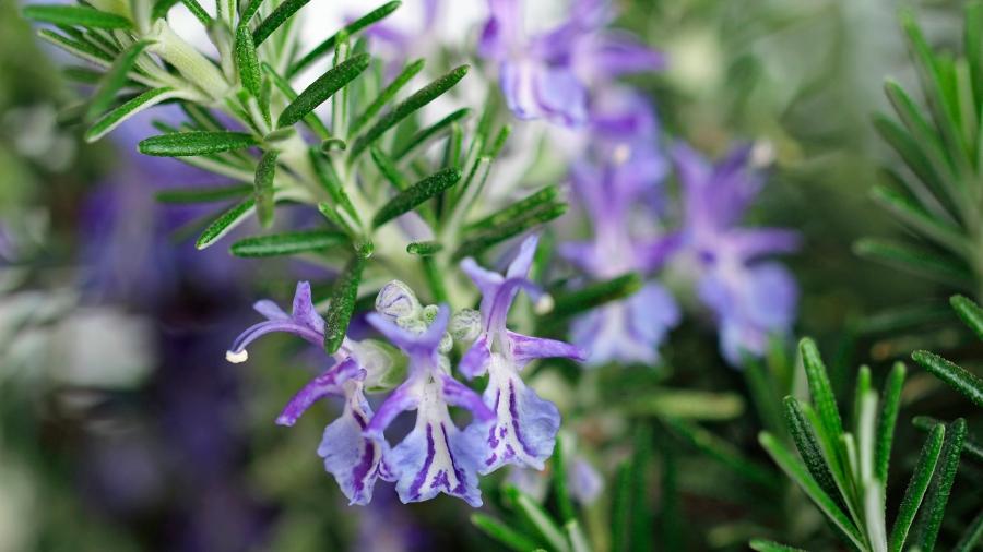 Herbal Medicine – Herb Blurb